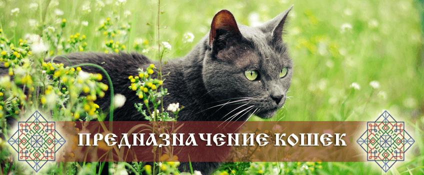 Предназначение кошки