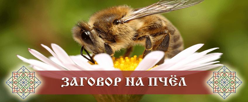 Заговор на пчёл