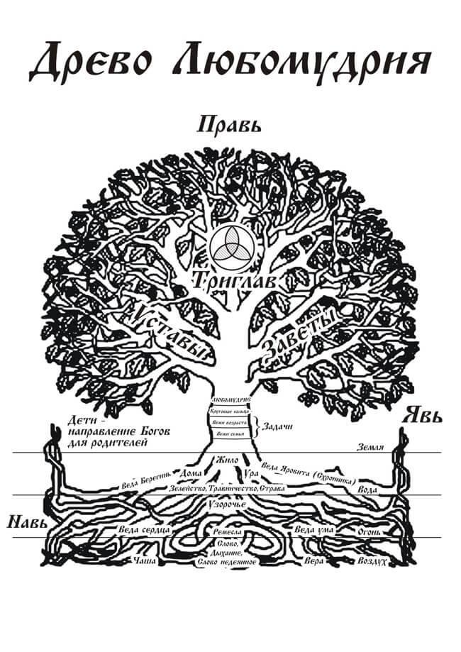 drevo_lubomudriya