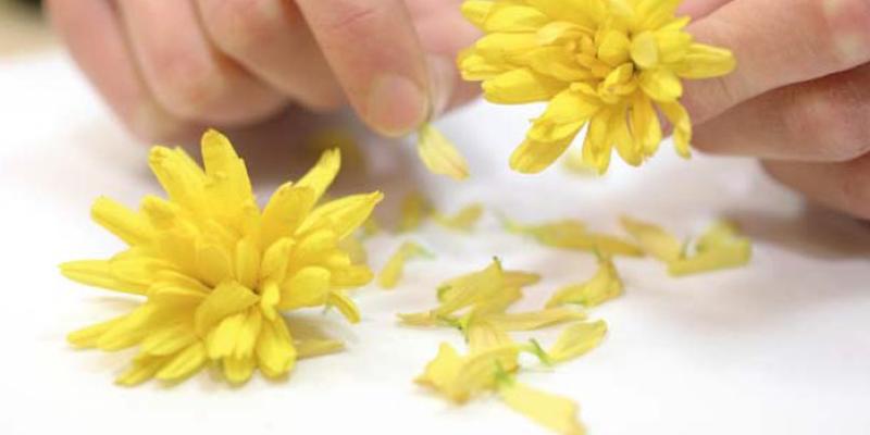 цветок-покровитель