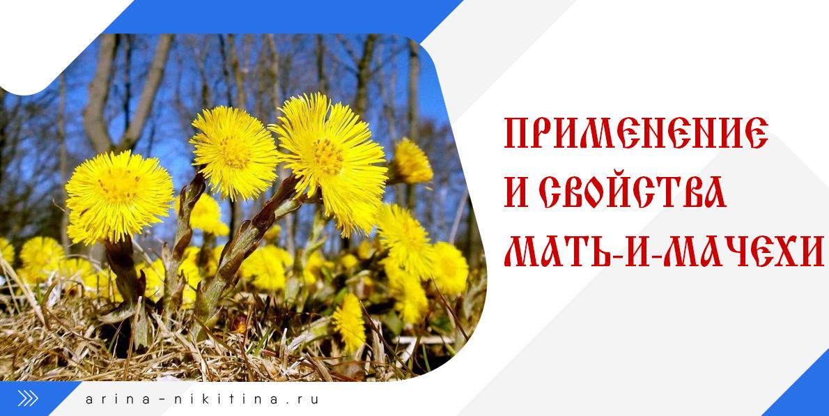 растение-мать-и-мачеха
