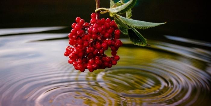 очищение воды народными способами