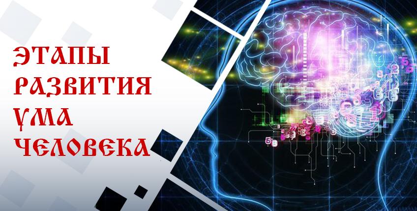 этапы развития ума. ум
